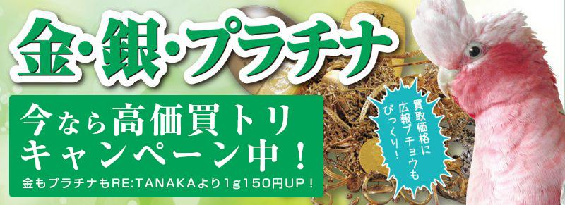 KG201805_gold-1-800x291